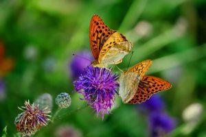 mariposas estomago spanischlernen