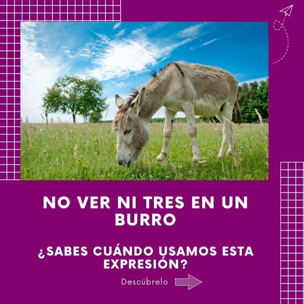 no-ver tres burro expresión aprender español